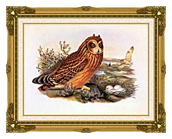 John Gould Short Eared Owl canvas with museum ornate gold frame