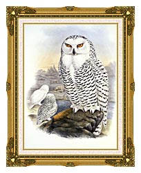 John Gould Snowy Owl canvas with museum ornate gold frame