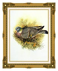 John Gould Wood Pigeon canvas with museum ornate gold frame