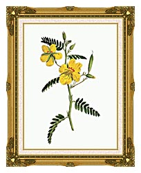 William Curtis Dwarf Cassia canvas with museum ornate gold frame