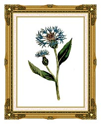 William Curtis Greater Blue Bottle canvas with museum ornate gold frame
