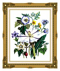 Jane Loudon Flower Art Print canvas with museum ornate gold frame