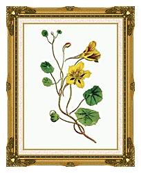 William Curtis Indian Cress canvas with museum ornate gold frame