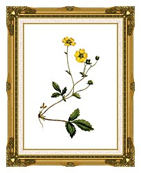 William Curtis Large Flowered Potentilla canvas with museum ornate gold frame