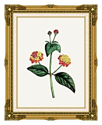 William Curtis Prickly Lantana canvas with museum ornate gold frame