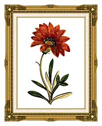 William Curtis Rigid Leaved Gorteria canvas with museum ornate gold frame