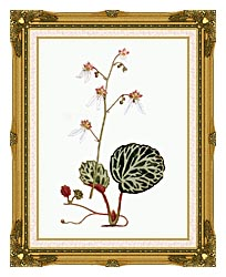 William Curtis Strawberry Saxifrage canvas with museum ornate gold frame