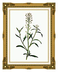 William Curtis Sweet Alyssum canvas with museum ornate gold frame