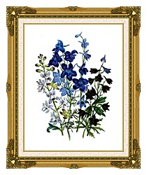 Jane Loudon Larkspurs canvas with museum ornate gold frame