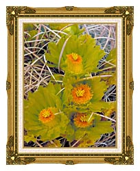 U S Fish And Wildlife Service Barrel Cactus canvas with museum ornate gold frame