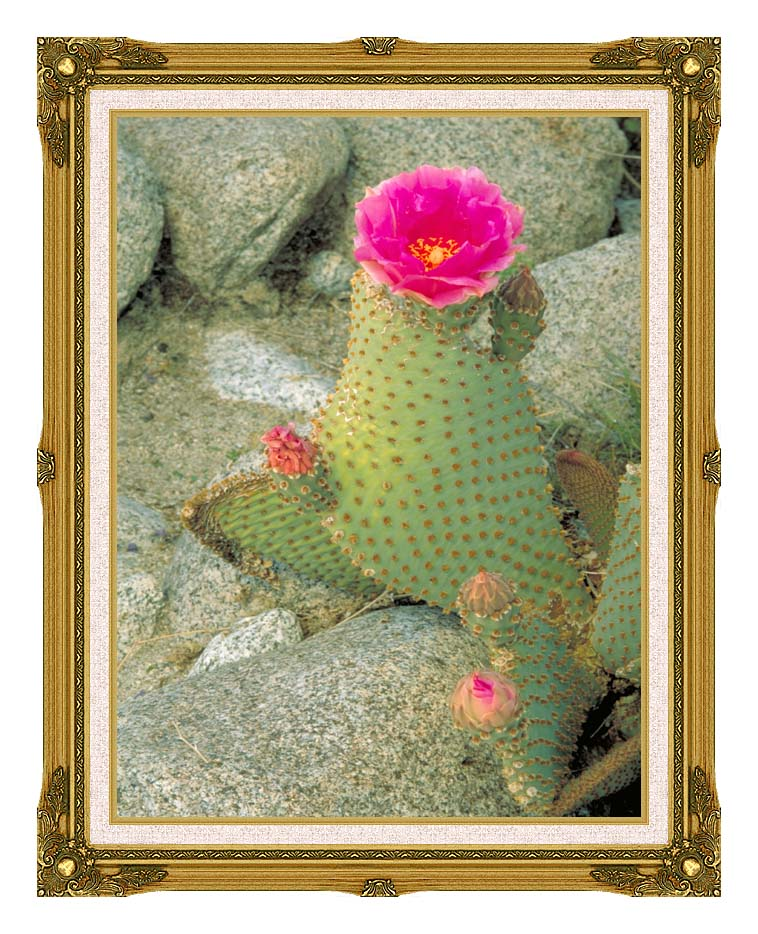 U S Fish and Wildlife Service Beavertail Cactus with Museum Ornate Frame w/Liner