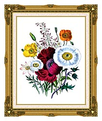 Jane Loudon Poppies Botanical canvas with museum ornate gold frame