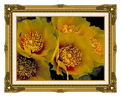 U S Fish And Wildlife Service Eastern Prickly Pear Cactus Flowers canvas with museum ornate gold frame