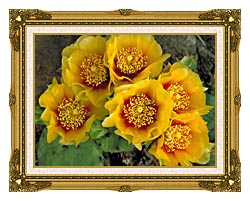 U S Fish And Wildlife Service Eastern Prickly Pear Cactus canvas with museum ornate gold frame