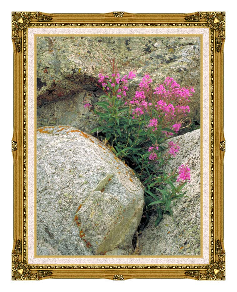 U S Fish and Wildlife Service Fireweed with Museum Ornate Frame w/Liner