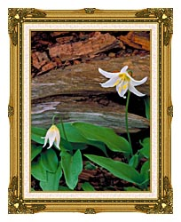 U S Fish And Wildlife Service Glacier Lily canvas with museum ornate gold frame