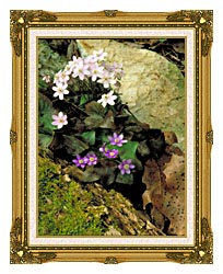 U S Fish And Wildlife Service Hepatica canvas with museum ornate gold frame
