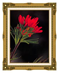 U S Fish And Wildlife Service Red Indian Paintbrush canvas with museum ornate gold frame