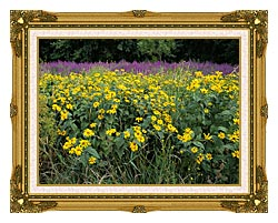 U S Fish And Wildlife Service Invasive Purple Loosestrife canvas with museum ornate gold frame