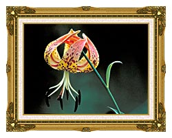 U S Fish And Wildlife Service Nodding Spotted Red Trillium canvas with museum ornate gold frame