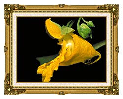 U S Fish And Wildlife Service Pale Jewelweed canvas with museum ornate gold frame