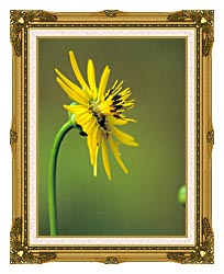 U S Fish And Wildlife Service Prairie Dock canvas with museum ornate gold frame