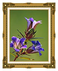 U S Fish And Wildlife Service Prairie Gentian canvas with museum ornate gold frame