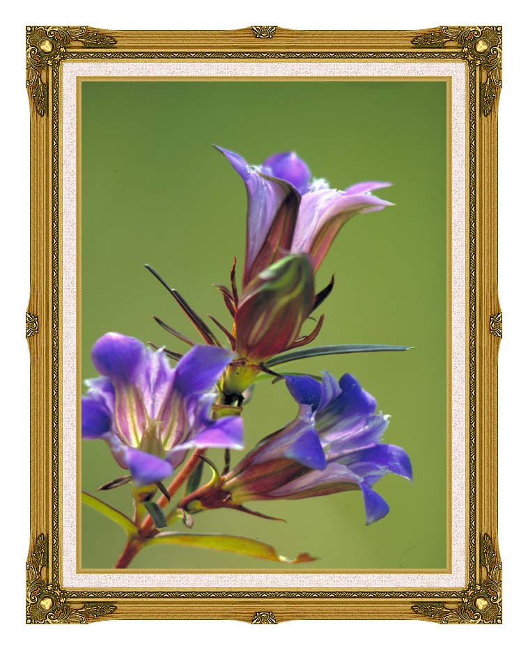 U S Fish and Wildlife Service Prairie Gentian with Museum Ornate Frame w/Liner