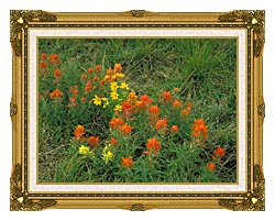 U S Fish And Wildlife Service Prairie Paintbrush canvas with museum ornate gold frame
