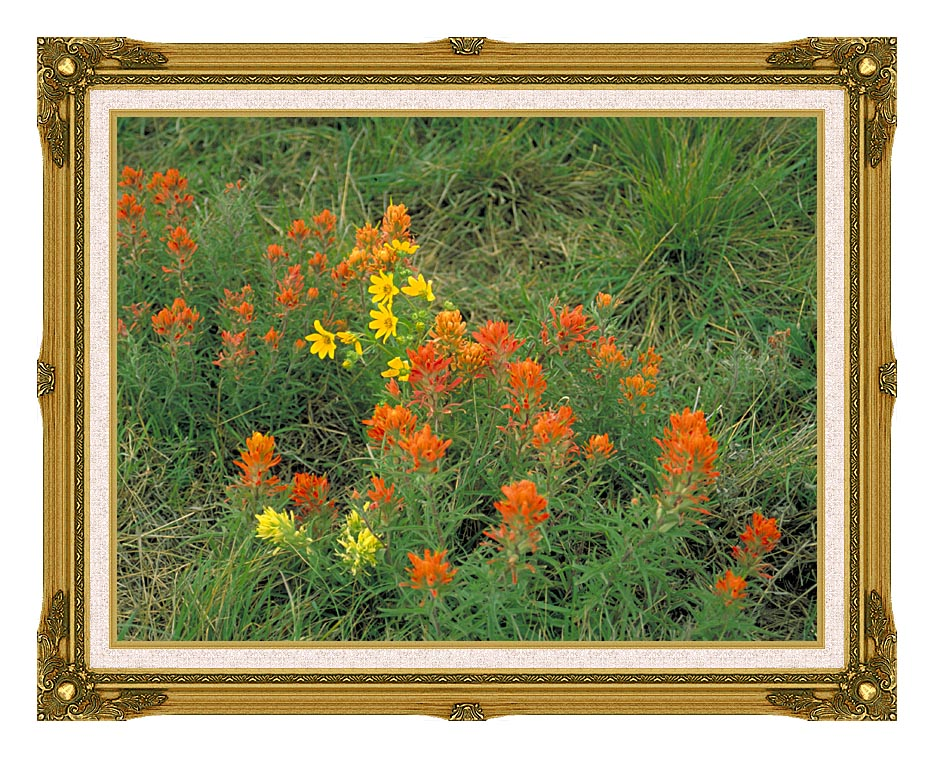 U S Fish and Wildlife Service Prairie Paintbrush with Museum Ornate Frame w/Liner