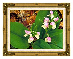 U S Fish And Wildlife Service Showy Orchis canvas with museum ornate gold frame