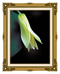 U S Fish And Wildlife Service Small Flowered Bellwort canvas with museum ornate gold frame
