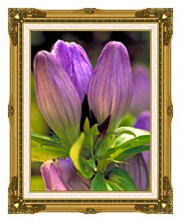 U S Fish And Wildlife Service Soapwort Gentian canvas with museum ornate gold frame