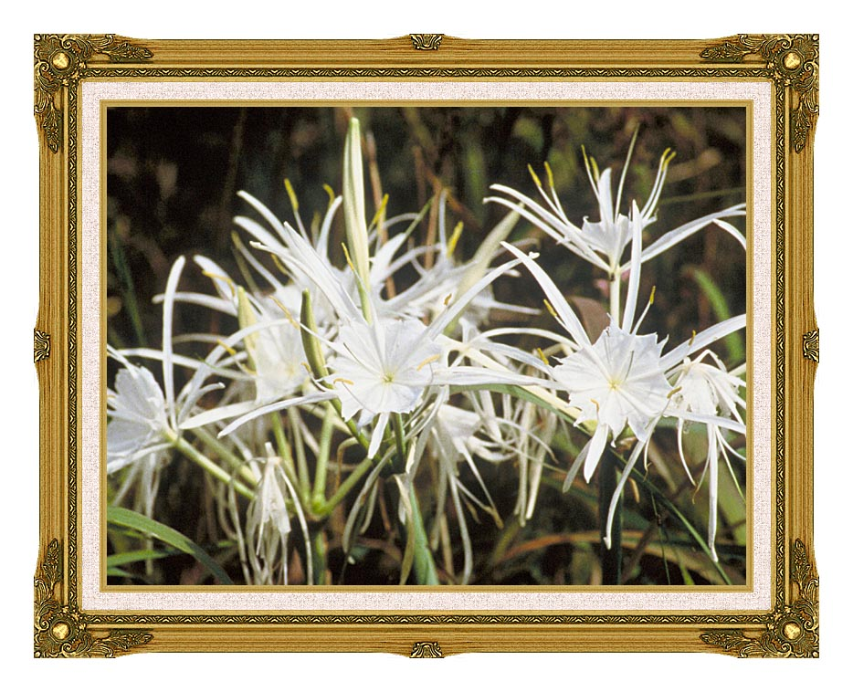 U S Fish and Wildlife Service Spider Lily with Museum Ornate Frame w/Liner