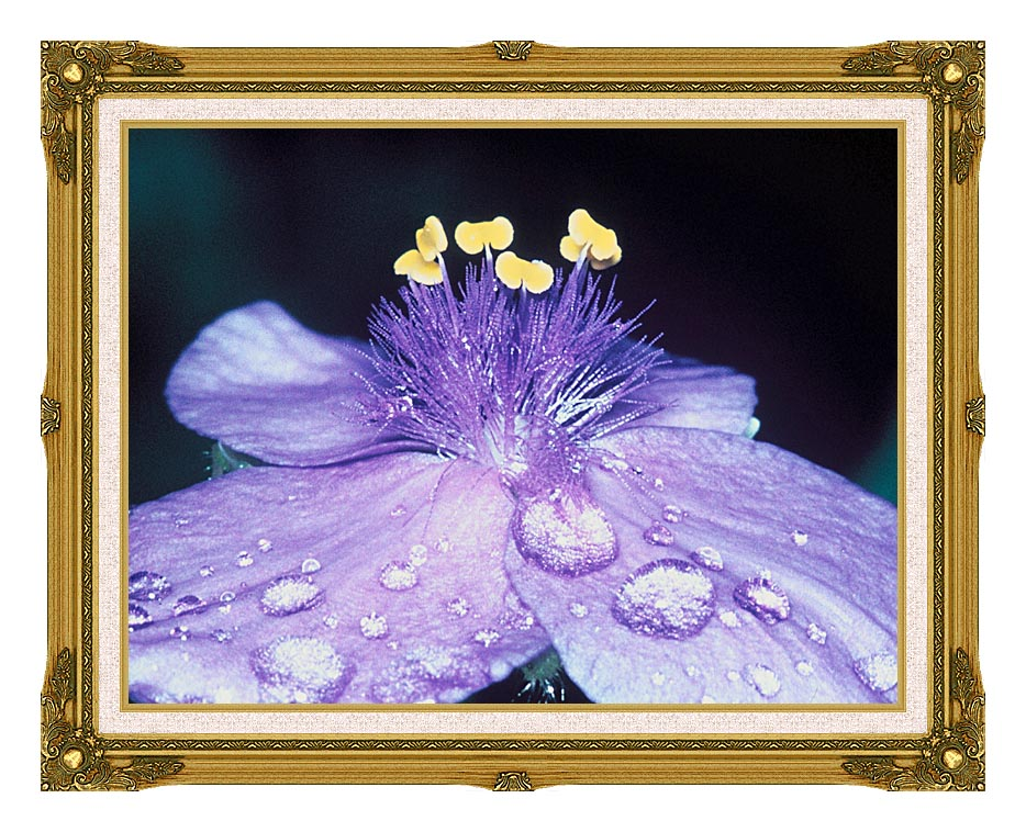 U S Fish and Wildlife Service Spider Wort Flower Art with Museum Ornate Frame w/Liner
