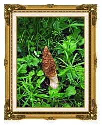 U S Fish And Wildlife Service Sponge Mushroom canvas with museum ornate gold frame