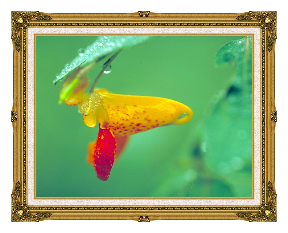 U S Fish and Wildlife Service Spotted Jewelweed with Museum Ornate Frame w/Liner