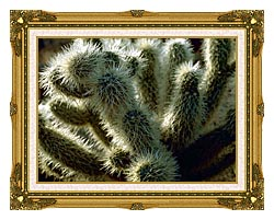 U S Fish And Wildlife Service Teddy Bear Cholla Cactus canvas with museum ornate gold frame