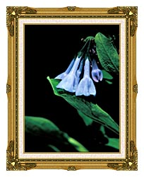 U S Fish And Wildlife Service Virginia Bluebells canvas with museum ornate gold frame
