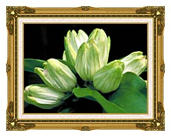 U S Fish And Wildlife Service White Gentian canvas with museum ornate gold frame