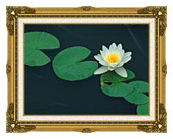 U S Fish And Wildlife Service White Water Lily canvas with museum ornate gold frame