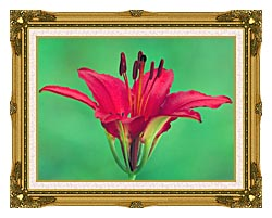 U S Fish And Wildlife Service Wood Lily canvas with museum ornate gold frame