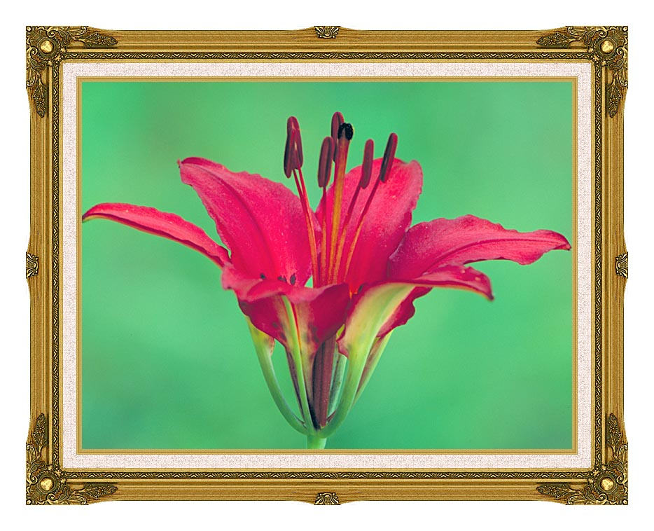 U S Fish and Wildlife Service Wood Lily with Museum Ornate Frame w/Liner