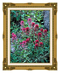 U S Fish And Wildlife Service Wyoming Paintbrush canvas with museum ornate gold frame