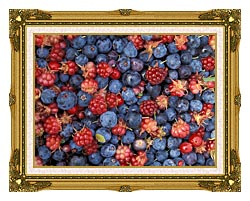 U S Fish And Wildlife Service Wild Berries canvas with museum ornate gold frame