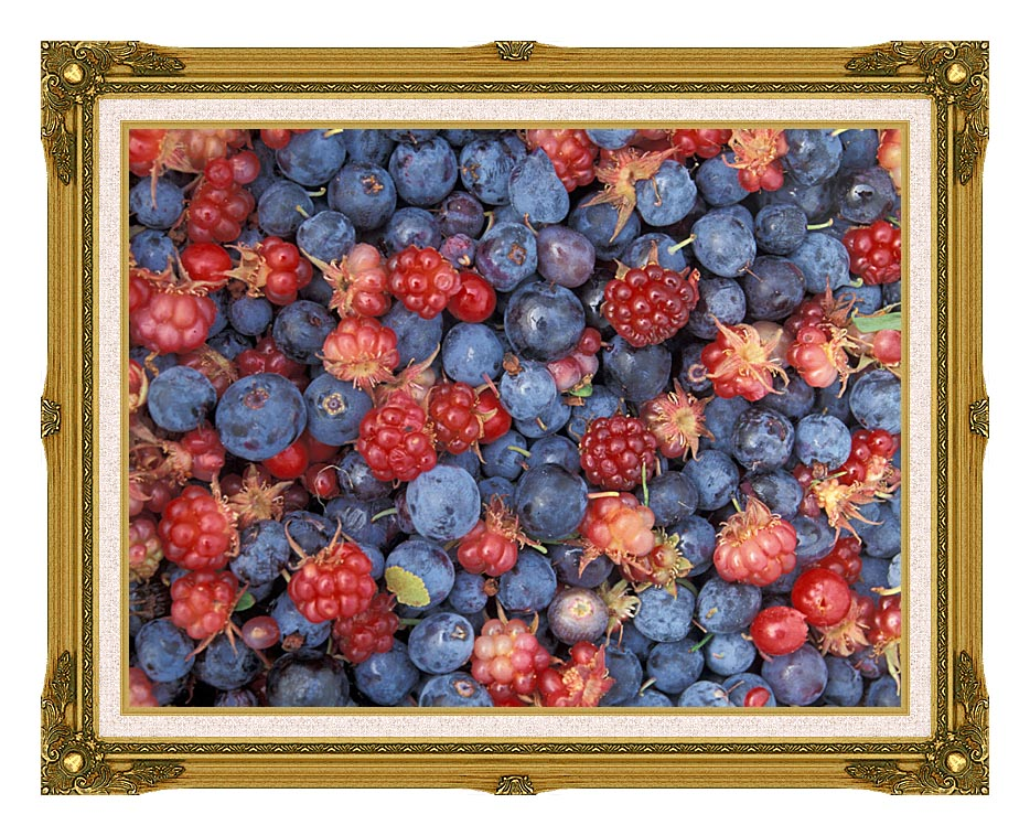 U S Fish and Wildlife Service Wild Berries with Museum Ornate Frame w/Liner