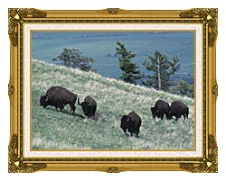 U S Fish And Wildlife Service Rocky Mountain Bison canvas with museum ornate gold frame