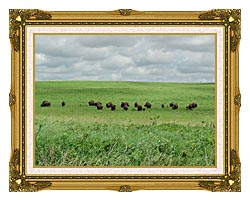 U S Fish And Wildlife Service Bison On The Range canvas with museum ornate gold frame