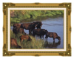 U S Fish And Wildlife Service Wild Bison canvas with museum ornate gold frame