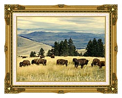 U S Fish And Wildlife Service Bison Herd canvas with museum ornate gold frame